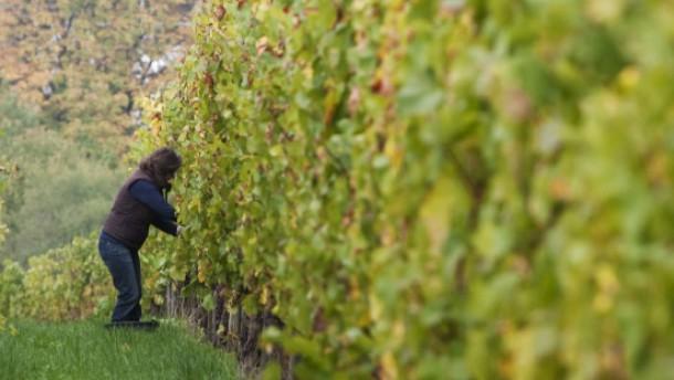 Weingelee statt Wilmersdorfer Rheingauperle