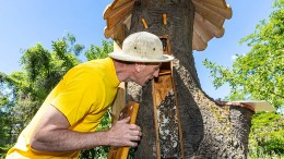 Holzstämme für 30.000 Bienen