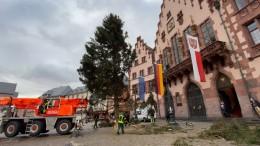 """Wie Weihnachtsbaum """"Bertl"""" auf den Römerberg kam"""