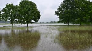 Frühling extrem mild und trotz Mai-Regens zu trocken