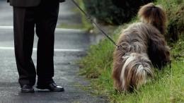 Hundebesitzer beim Gassigehen mit Hammer attackiert