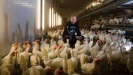 Verkaufs-Erfolg mit Bodenhaltung: Hühnerbauer Martin Stark aus Frankfurt inmitten seiner Legehennen