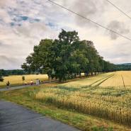 Richtung Westen, immer geradeaus: Zu beiden Seiten der Tannenwaldallee wäre Platz für einen Bürgerpark.
