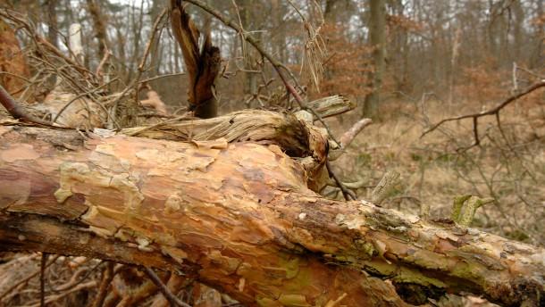 """Naturschützer warnen vor """"Umweltkatastrophe"""" im Ried"""