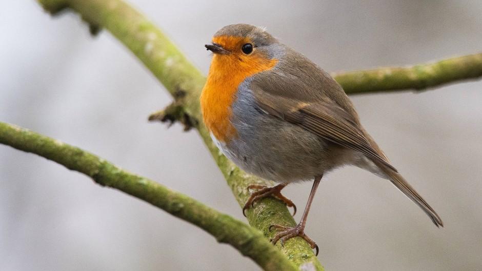 Nabu Ruft Zu Zahlaktion Fur Gartenvogel Auf