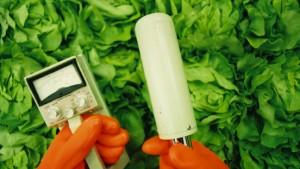Hessen prüft japanische Lebensmittel auf Strahlung