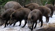 Radler und Wildschweine bremsen Bahn aus