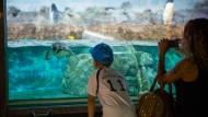 Günstiges Erlebnis: Mit dem Frankfurt Pass können Kinder schon für 50 Cent und Erwachsene für einen Euro den Zoo besuchen.