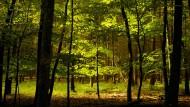 Nur noch jeder vierte Baum stark geschädigt