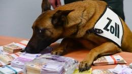 Spürhund Aki erschnüffelt 250.000 Euro Bargeld