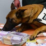 Spürnase: Zollhund Aki und sein Fund
