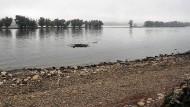 Mangel: Schon im Oktober führte der Rhein im Rheingau viel zu wenig Wasser