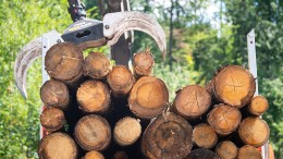 Waldbesitzer sehen sich beim Holz-Boom außen vor