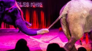 Unsere Elefanten sind anhängliche Tiere