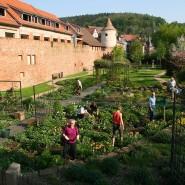 Begründete Befestigung: Schon jetzt bieten sich an der Büdinger Stadtmauer gärtnerische Blickfänger.
