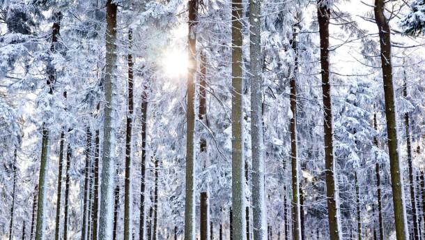 Großen Feldberg Winterimpressionen