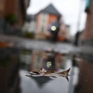 Gewässert: Ein Blatt liegt auf dem Römerberg in Frankfurt in einer Pfütze, aufgenommen am 6. Oktober