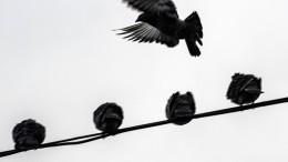 Luftballon gerät in Oberleitung und stört S-Bahn-Verkehr