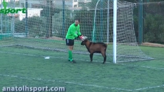 Ziegenbock stört Fußballspiel
