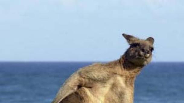 Jura lernen bei den Känguruhs