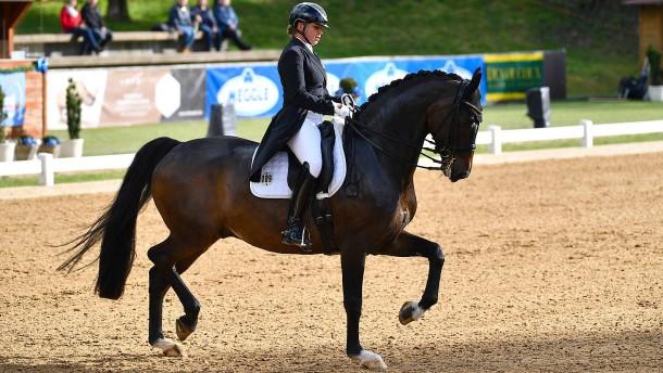 Das Pferd passt auf die Reiterin auf