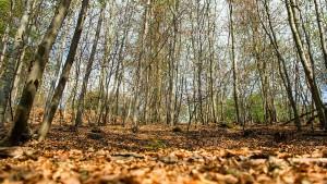 Jetzt geht es um den deutschen Wald