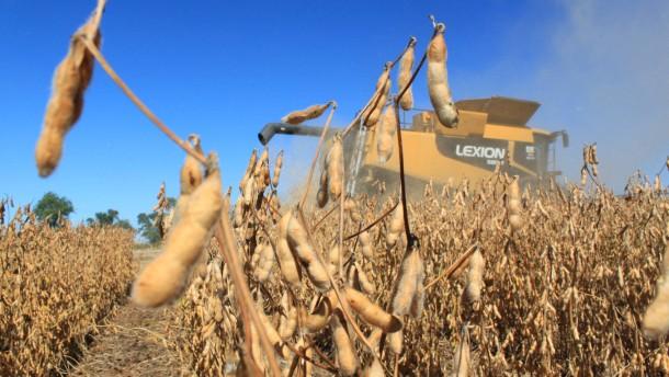 Spekulanten: Wir machen das Getreide teuer