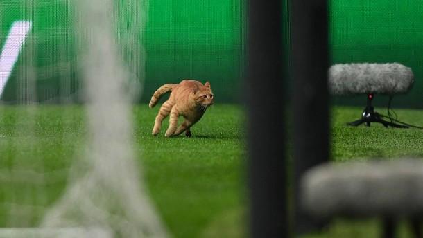 Besiktas muss für Flitzer-Katze zahlen