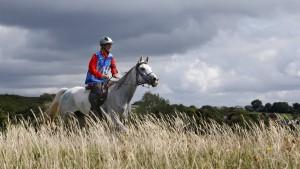 Pferd stirbt beim Distanzreiten