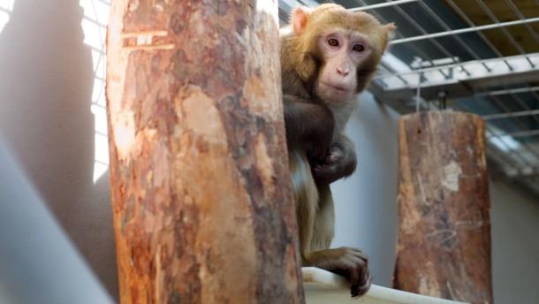 Alternativlose Tierversuche