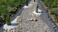Ökologische Todeszone zwischen Restvegetation: In diesem Steingarten werden Kies und Schotter kombiniert.