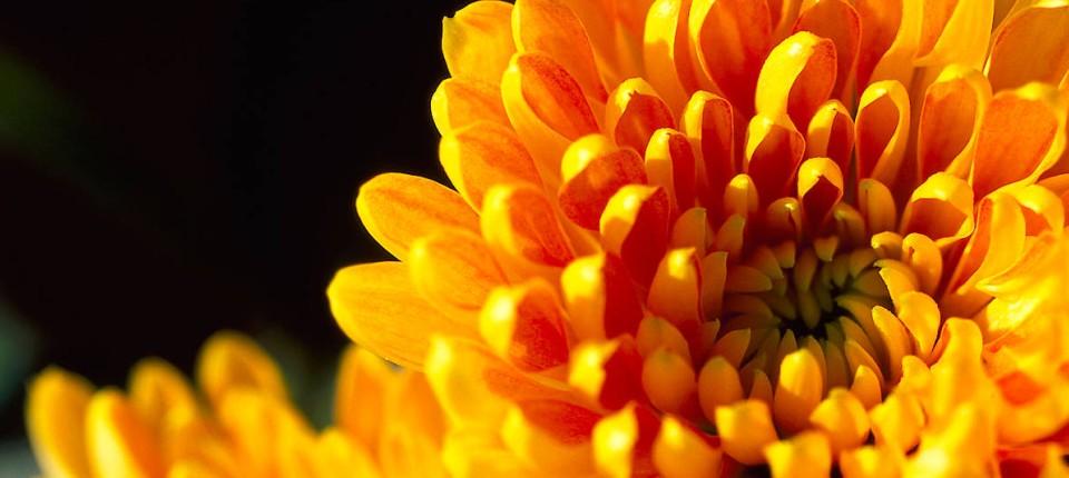 Buntes Beet Im Herbst Dank Aster Salbei Oder Chrysanthemen