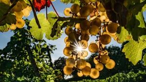 Die besten Weine einer durchwachsenen Saison