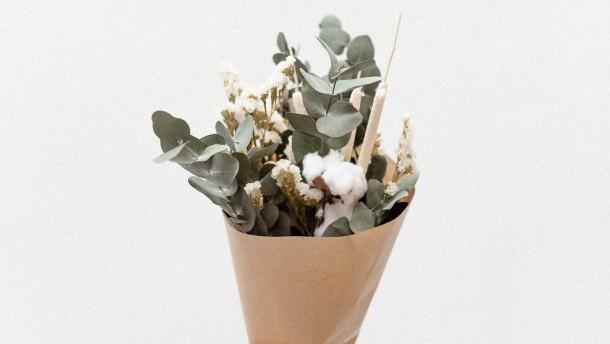 Eukalyptus mit allem
