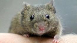 Wenn die Maus hamstert