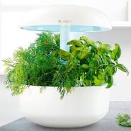 Hauptsache grün: Die Pflanzen wachsen ohne Erde.