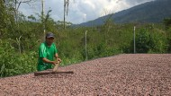Bald können sich die Kakaobohnen auf den Weg machen.