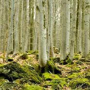 Bisher gelang das Verfahren erst mit einem dünnen Scheibchen aus Buchenholz.