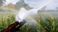 Hier wird im Juli ein Maisfeld in Niedersachsen bewässert, und neben dem kühlen Nass dürfen sich die Pflanzen auch an dem entstehenden Regenbogen freuen.