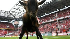 Fußball - 1. FC Köln - Eintracht Frankfurt