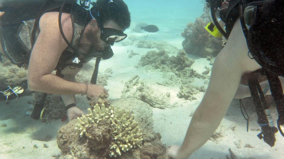 Ein Tauchlehrer führt die Naturschönheit am Great Barrier Reef vor der australischen Küste vor.