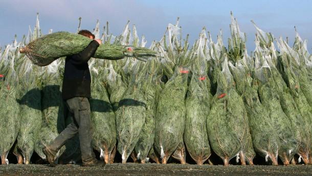 Weihnachtsbäume kosten dieses Jahr rund 30 Euro