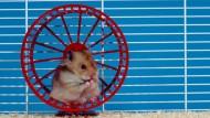 Mit guten Vorsätzen und einer Strategie zu ihrer Umsetzung gibt es ihn: den Ausweg aus dem Hamsterrad.