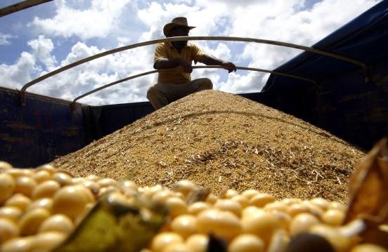 Die Mehrheit der Bauern in Nord- und Südamerika pflanzt bereits Gentech-Sorten an