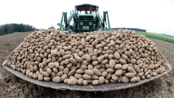 Kartoffelpreise könnten stark steigen