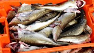 Zielfische und Fischziele verfehlt