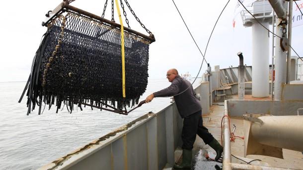 Muschelfischer starten optimistisch in neue Saison