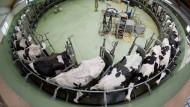 Mindestens 100 Millionen Euro für Milchbauern