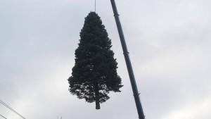 Der Trend geht zum makellosen Weihnachtsbaum