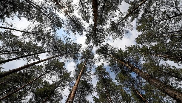Wie ein Student den Klimawandel stoppen will